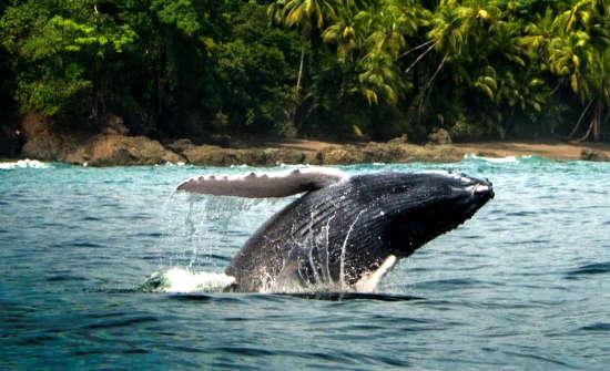 Fauna Santa Tereza